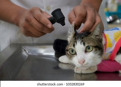 Cat check-up by veterinarian or vet animal doctor treating in hospital