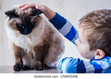 cat child balinese together play kid happy. affection boy.