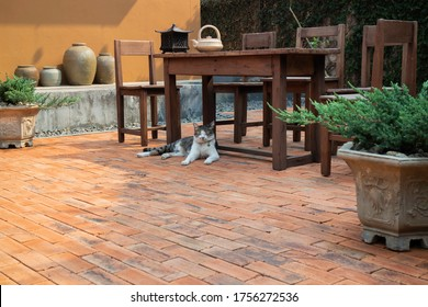 Cat chilled on brick floor background, stock photo