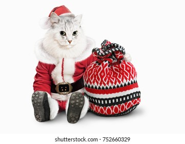 cat in Christmas closes