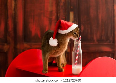cat in christmas hat drinking milk from bottle