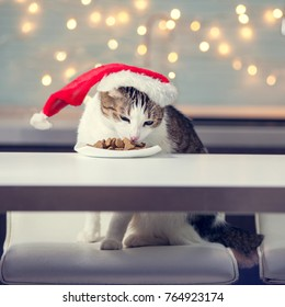 Cat in christmas hat eating food. Happy pet santa.