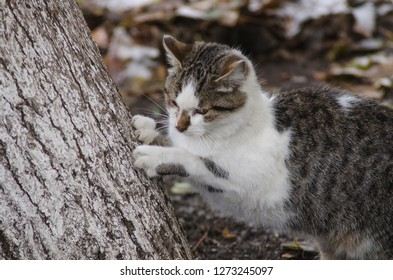 the cat is clawing wood