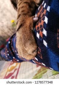 cat claws grasp
