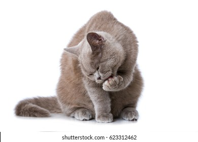 Cat cleaning himself
