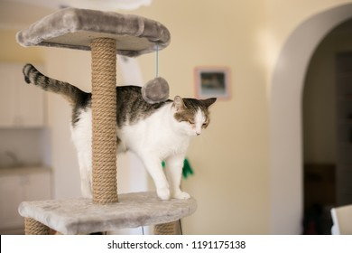 The cat climbed onto the tower for cats, a blurred background