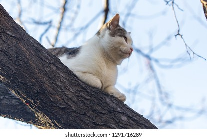 The cat climbed a tree .