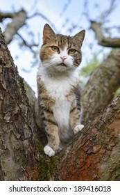 Cat climbed up a tree