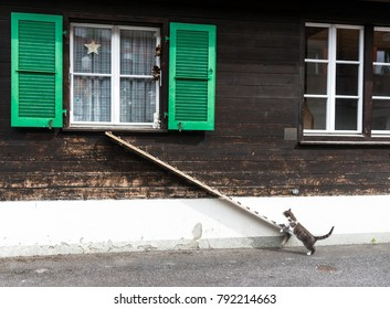 A cat climbing up the ladder leading to the window.