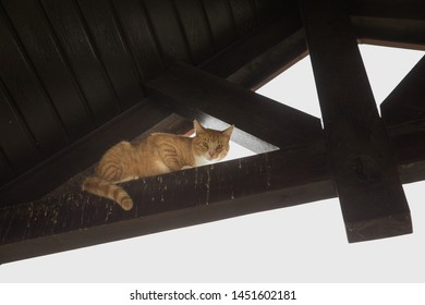 A cat climbing the roof. A cat hunting for birds on the roof.