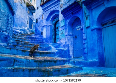 A cat climbs stairs on a blue painted street in the medina of Chefchaouen in Morocco
