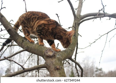 The cat climbs the tree