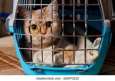 Cat closed inside pet carrier