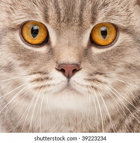 Cat close-up portrait