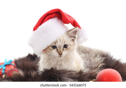 Cat at coat isolated on a white background.