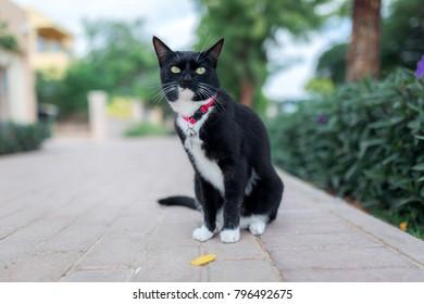 Cat with collar