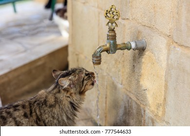 Cat colorful and thirsty is drinking water from a faucet. Blurred background. Close up view.