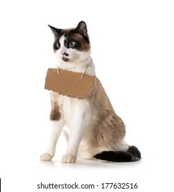 cat communication - ragdoll cat wearing cardboard sign around neck isolated on white background