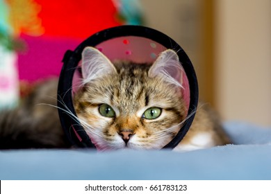 Cat in a cone collar after surgery on a blue blanket with colorful cushions in the background
