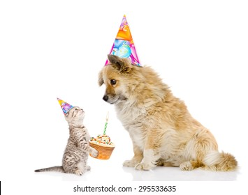 cat congratulates dog on his birthday. isolated on white background