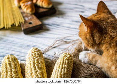cat, corn, spaghetti and pies on a white wooden background, yellow and white