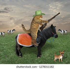 The cat cowboy in a hat and boots with his dog grazes a herd of cows on the farm. He has a gun.