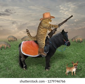 The cat cowboy in a hat and boots with his dog grazes a herd of sheep on the ranch. He has a rifle.