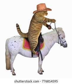 The cat cowboy in a hat is riding a horse. White background.