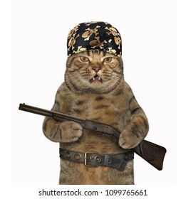 The cat criminal in the pirate bandana holds a rifle. White background.