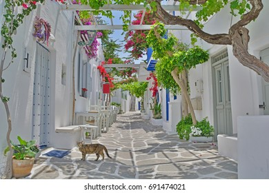 Cat crosses a quiet, shady village street on a greek island in the Cyclades Group with flowering bougainvillea