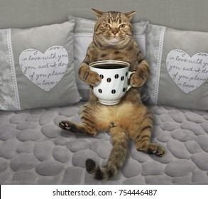 The cat with a cup of black coffee is on a gray sofa.