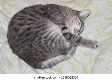 The cat curled up and sleeps