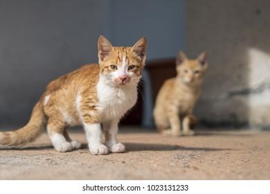 Cat Cute Crete