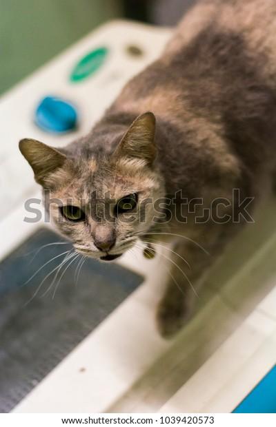 Cat Cute furry kitten indoor