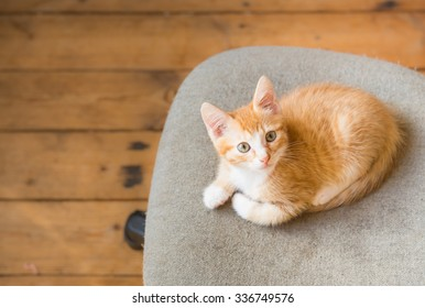 Cat. Cute ginger kitten