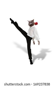The Cat dances  tango with a red  flower on  white background,  collage