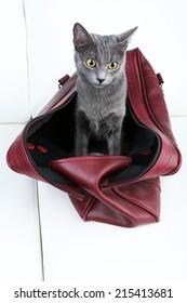 Cat in dark red bag on light background