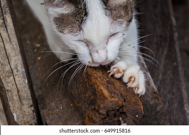 Cat Declawing nature with wood. Cat claws nails manicure.