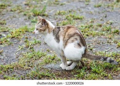 Cat Poop Images Stock Photos Vectors Shutterstock