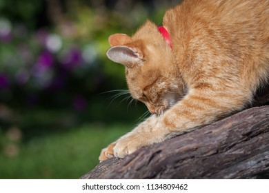 cat descending from a tree