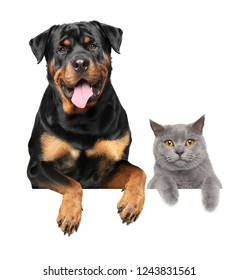 Cat and dog above banner, isolated on white background