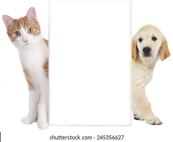 Cat and dog behind empty board