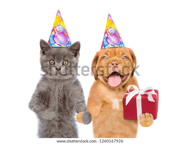 Cat And Dog In Birthday Hats With Gift Box Isolated On White Background