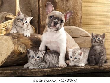 Chat et chien, chatons britanniques et chiot français à Bulldog sur fond rétro