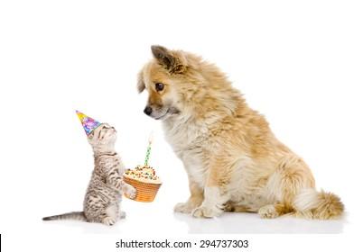cat and dog celebrate birthday. isolated on white background