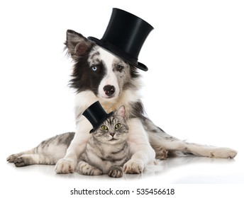 Cat and dog with cylinder hats