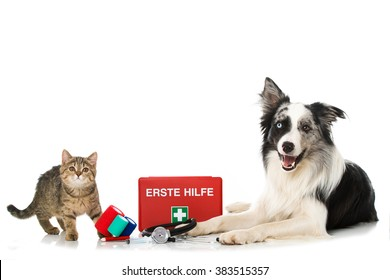 Cat and dog with first aid kit