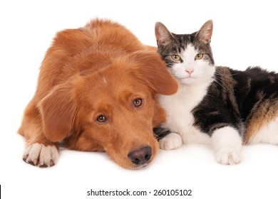 Cat and dog in a friendly pose