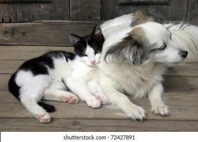 Cat dog friendship