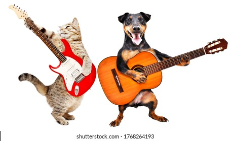 Cat and dog with guitars isolated on a white background